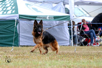 Working Dog Class - Female LSH